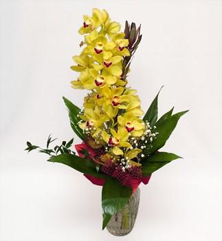 Orchidej velká